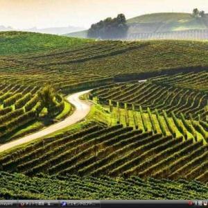 ピエモンテのブドウ畑の景観 - イタリア 世界遺産 写真・壁紙集