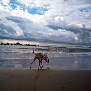 朝から海へ
