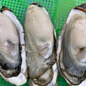 牡蠣ダイエット