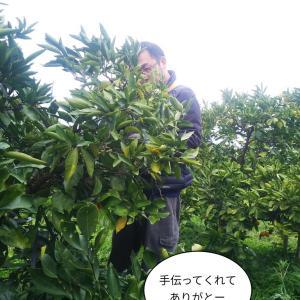 https://noukayome1.blog.fc2.com/blog-entry-3484.html