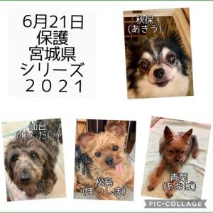 新入生4匹(チワワ、ミックス、ヨーキー)