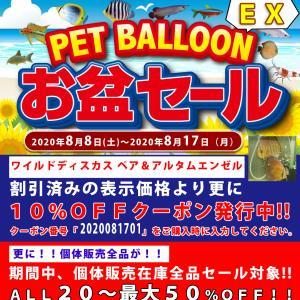 ワイルドディスカス専門店ペットバルーンEXお盆セール開催!!