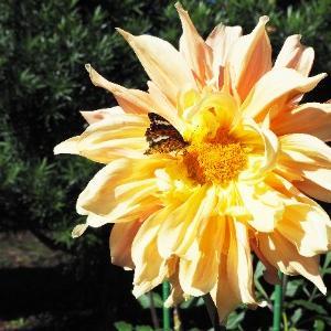 【秋バラやパンパスグラスなどを眺めながら季節を感じる・神代植物公園☆】