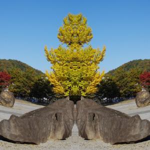 Symmetry world