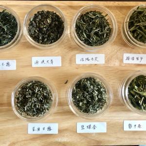 茶塾 第1講 緑茶会