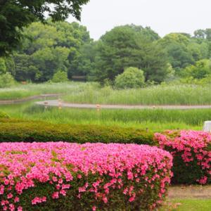 昭和記念公園を散歩した
