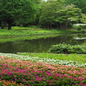 昭和記念公園へ行った