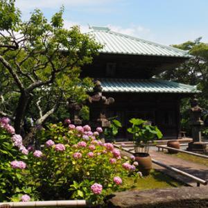 鎌倉~英勝寺のアジサイ