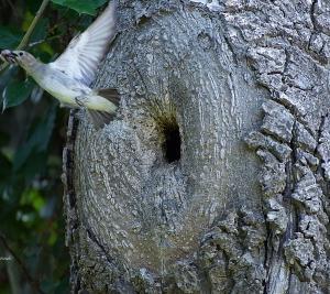 「気になる木」