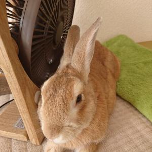 扇風機の風が好き。