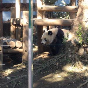 上野と言えばパンダちゃんとゴッホ