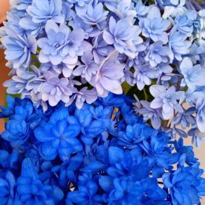 紫陽花の染め花