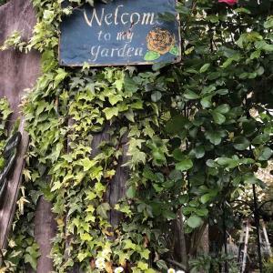 GW前の庭