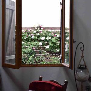 今日の庭 フロレンティーナの赤