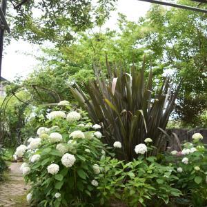 今日の庭 #アナベル #芝の種蒔き #堆肥づくり