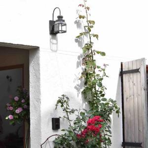 今日の庭 ちらほらとバラ返り咲き