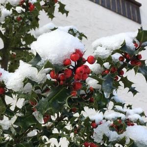 目覚めたら雪景色