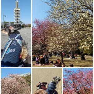 駒沢公園でお散歩
