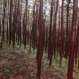 山歩き いつもの山道 紅葉
