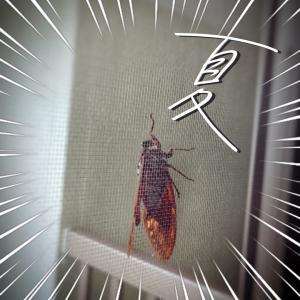 【ドンッ!】