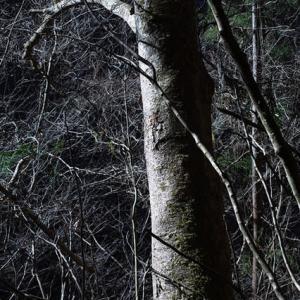 あきる野の森
