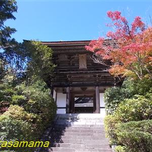 初秋円成寺の紅葉