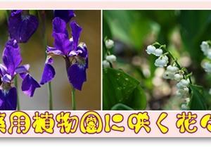 薬用植物園に咲く花々