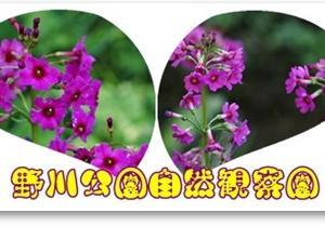 野川公園自然観察園