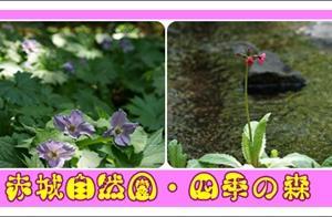 赤城自然園・四季の森