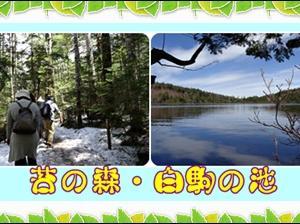 苔の森・白駒の池
