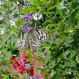 「蝶の楽園」と祖母と孫