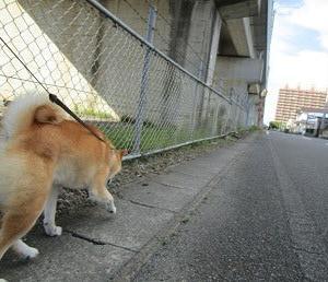 散歩が好き