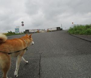 散歩しやすくなってきた