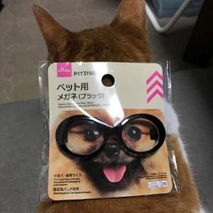 今日のメガネ