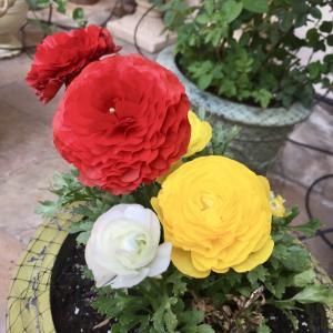自宅待機命令ー家にいるのは好きだけど…「団子より花」の春?