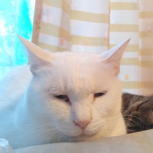 """思わぬ打開策♫ """"野良猫餌やり問題→不妊手術セットがベストだが飢え死にさせる位なら..."""""""