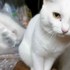 白猫ファミリー自主的ソーシャルディスタンス