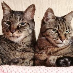 猫ちゃんにより破壊されたテレビ購入ピックアップ中 (=゚ω゚=)