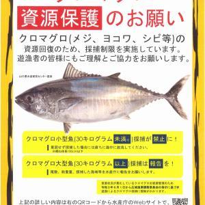 クロマグロ採捕に関わる指示