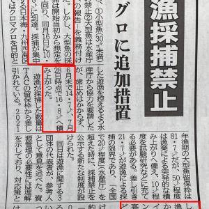 【速報/確定】大型クロマグロ採捕情報