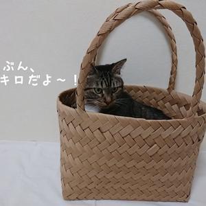 猫で耐久性確認♪