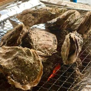 今日のランチは牡蠣奉行 出張カキ小屋で牡蠣 &ホタテのバーベキュー♪