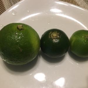 柑橘3兄弟