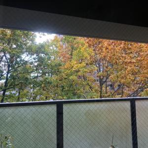 窓の向こうの秋