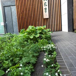 六花亭の庭
