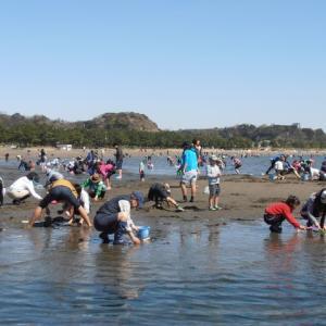 2017年4月  今年の海の公園 潮干狩り・・・壊滅?
