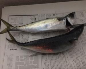 加太大波止釣行 11月15日