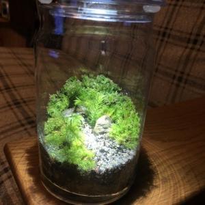 苔のテラリウム作ってみました