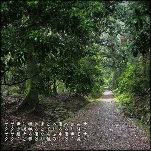 雨降る森の道