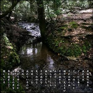 原始林の中を流れる